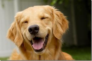 cachorro-feliz-momento_thumb2